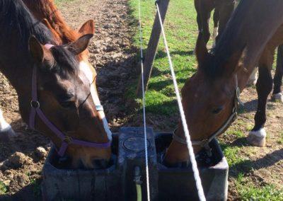 Les chevaux ont soif